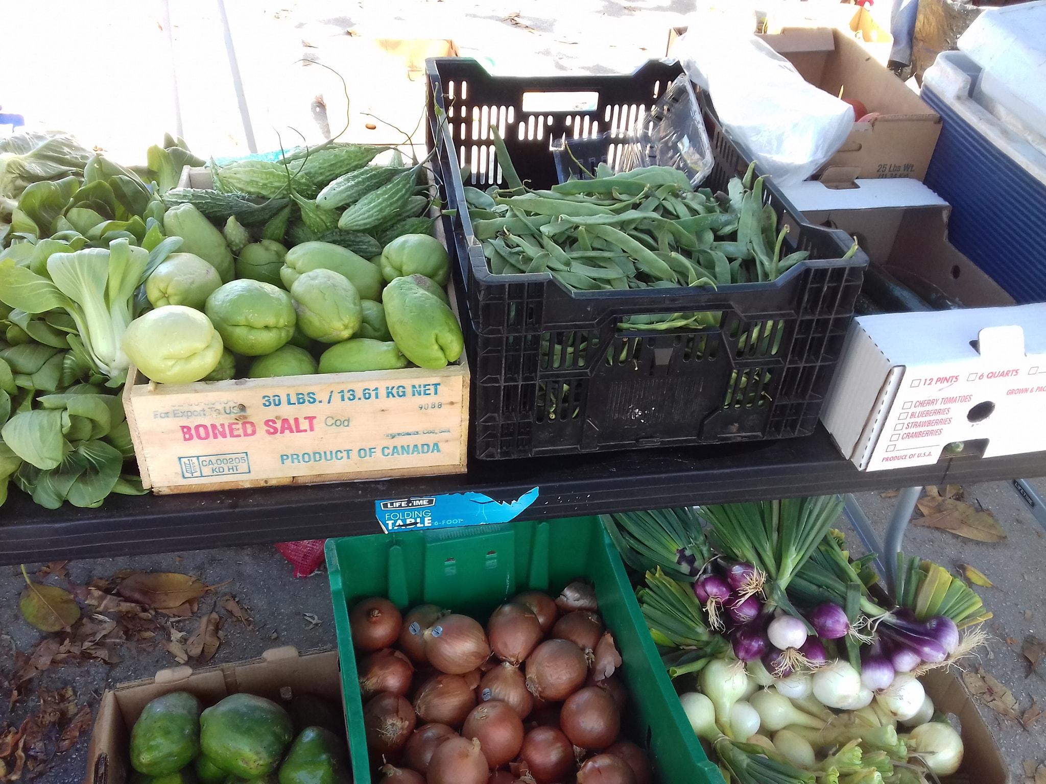 Javaughn Dill Fresh Vegetables