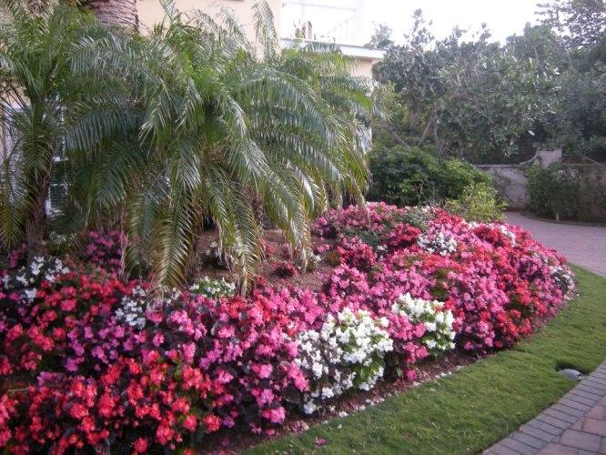 All Seasons Garden Care