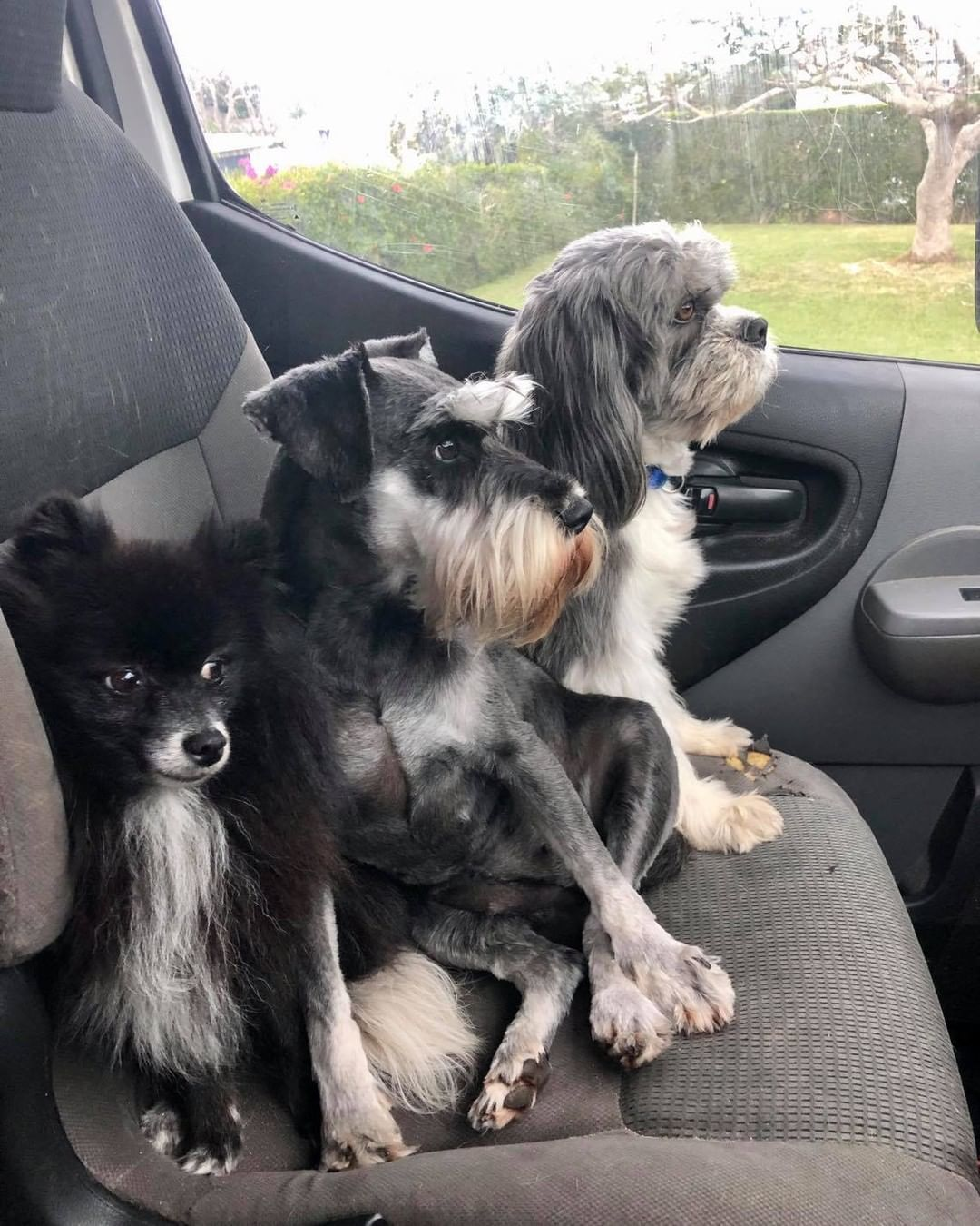 Bermuda Pet Sitters