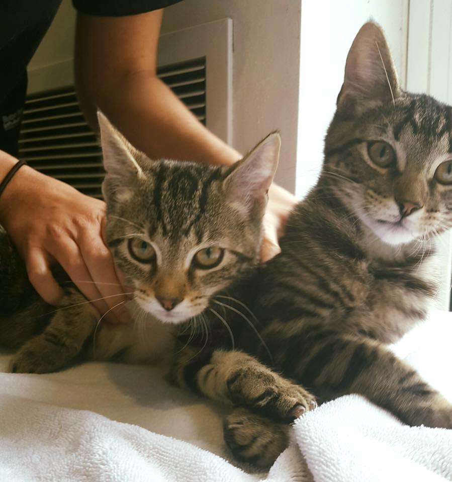 Bermuda Feline Assistance Bureau