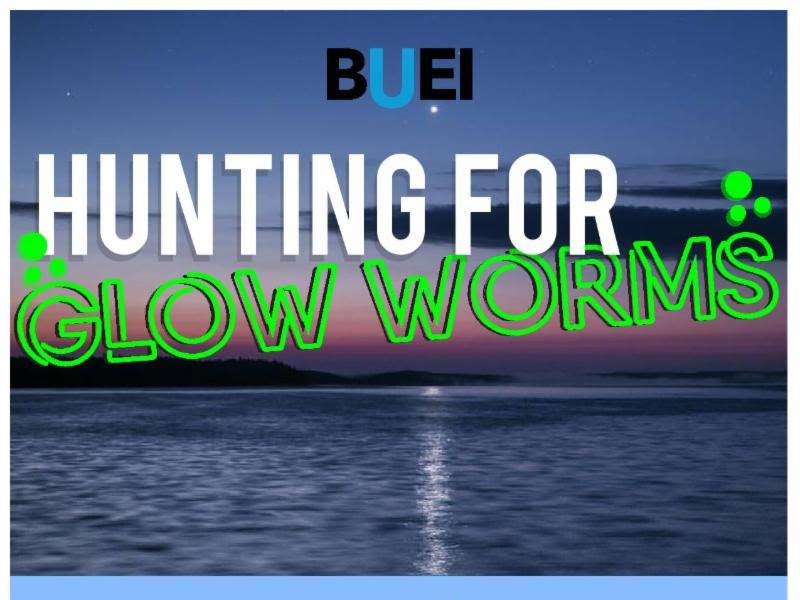 Hunting for Glow Worms Cruises, July 18th & 19th
