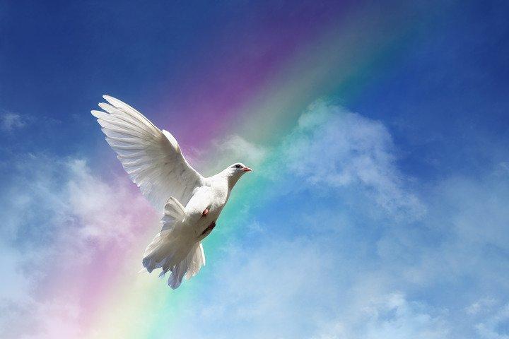 KCR Dove Release