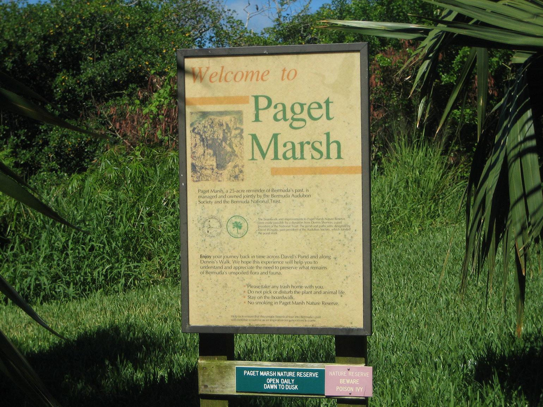 Paget Marsh