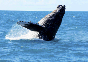 Whale Watching Tours are back!