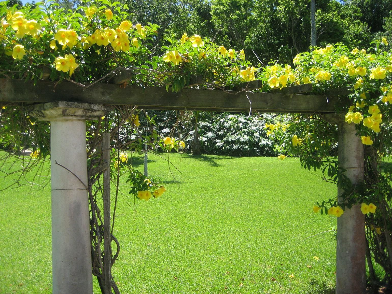 Palm Grove Garden