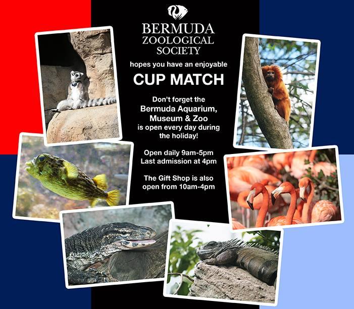 BAMZ Bermuda Open Cup Match