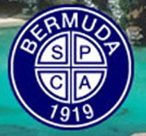 Bermuda SPCA Cat Micro-Chipping Special
