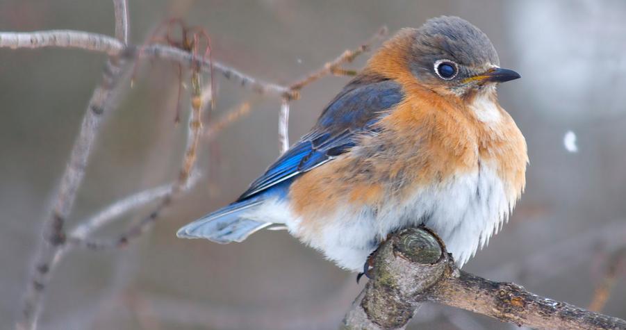 Bermuda's Native Birds: Part 1