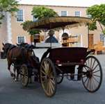Bermuda horse and carriage